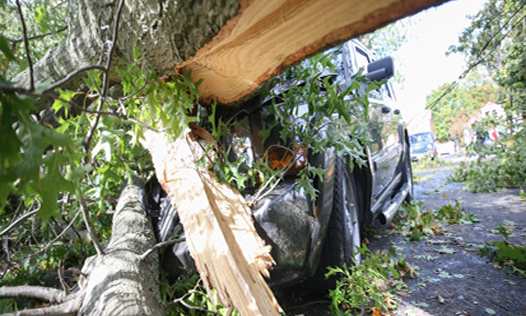 Emergency Tree Services to a Fallen Tree