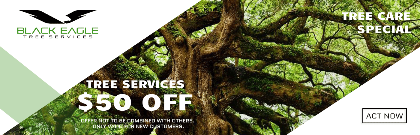 Tree Care Special Discount