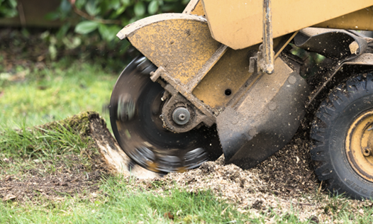 Our Equipment doing Stump Grinding Service