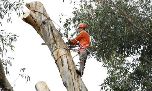 Tree Removal - Arborist doing his work