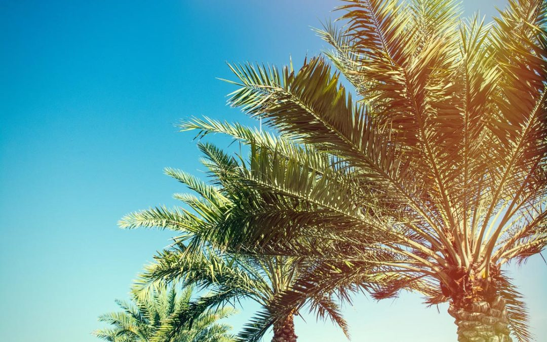 Maintaining Your Beautiful Palm Trees