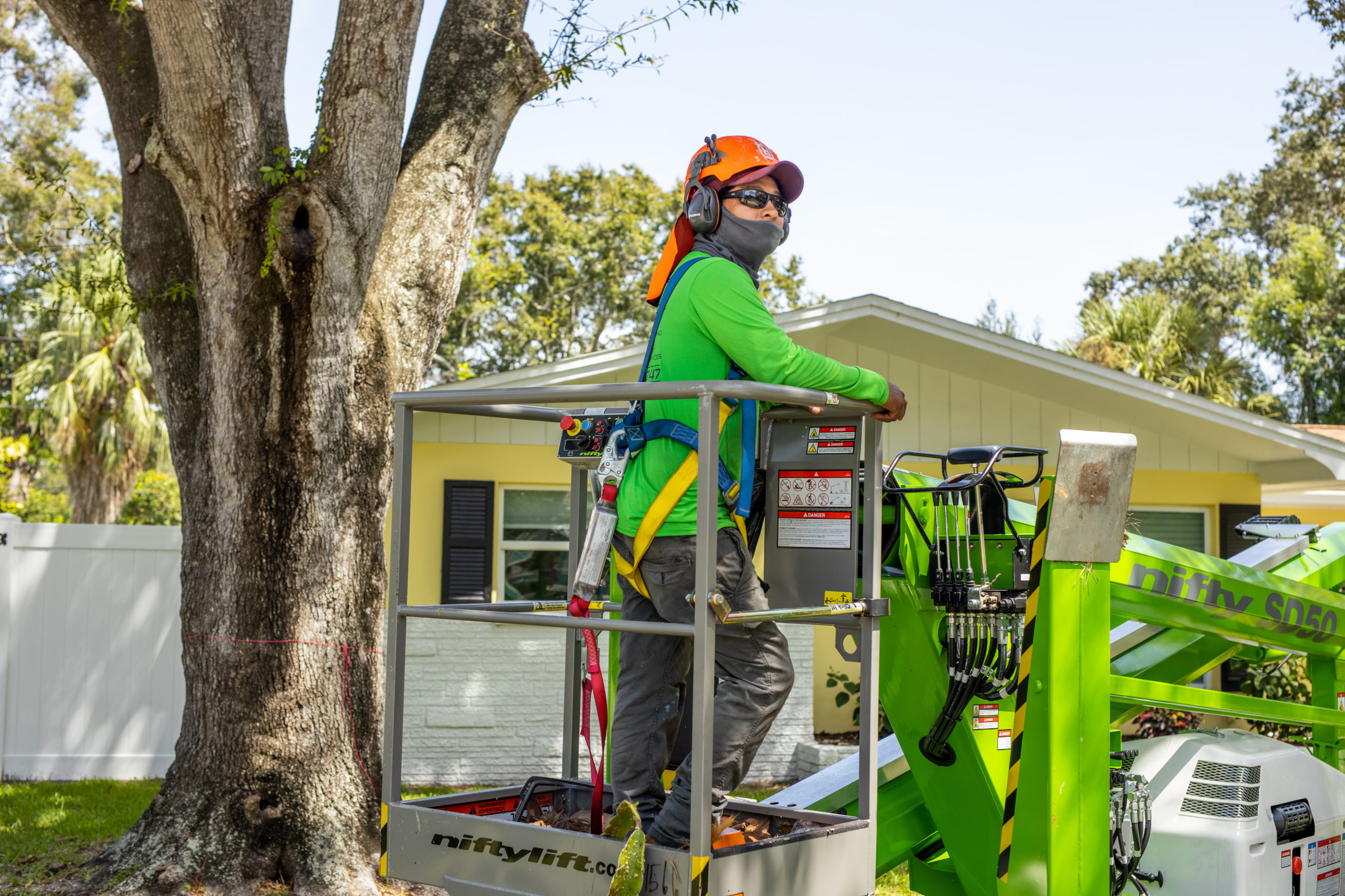 Our Staff Doing Actual Tree Service Work in Pinellas County