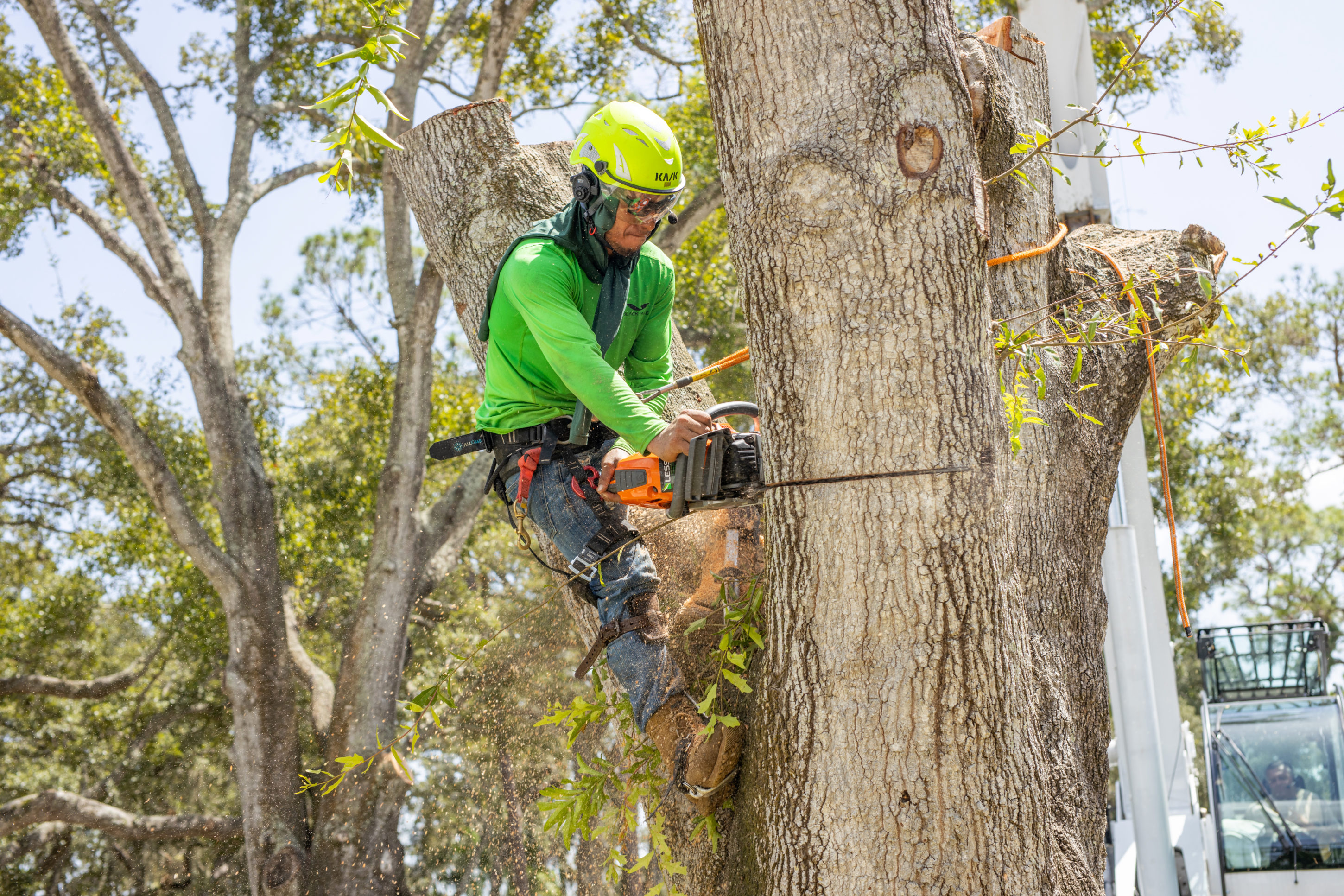 Pinellas County Tree Service