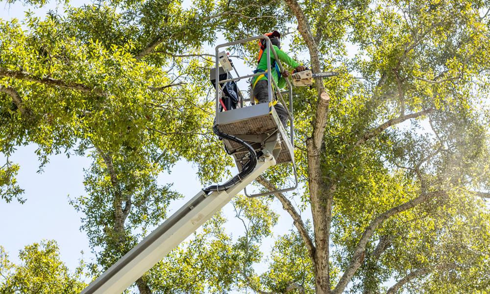 Pinellas County Tree Removal Crew